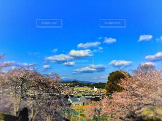青空と桜の写真・画像素材[1111048]