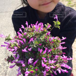 お花だいすき!の写真・画像素材[1372336]