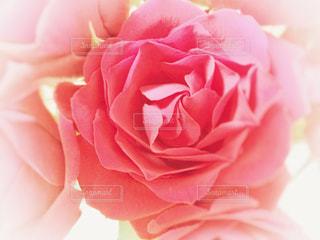 近くの花のアップの写真・画像素材[1793809]