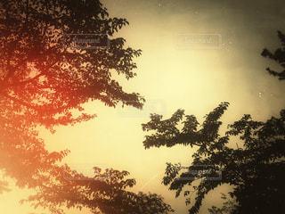 風景,空,夕日,木,葉,景色,光,レトロ,樹木,ナチュラル,フィルム,雰囲気,カラー,フィルム写真,フィルムフォト