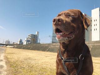 カメラを見ている茶色と黒の犬の写真・画像素材[2279256]