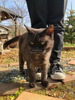 公園の真ん中に立っている猫の写真・画像素材[2292517]