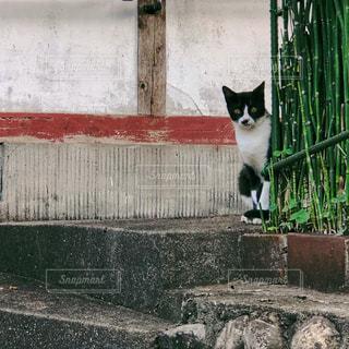 木製のフェンスの上に座っている猫の写真・画像素材[2292518]