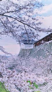 風景,空,建物,花,春,桜,木,雪,屋外,ピンク,季節,城,花見,樹木,お花見,屋根,イベント,石垣,眺め,櫓,クラウド,城跡,物見櫓
