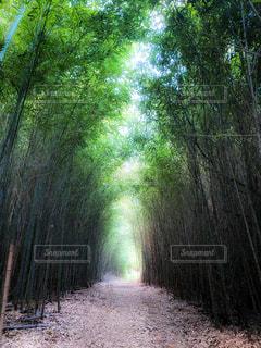 里山竹林のトンネルの写真・画像素材[3140678]