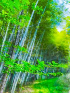 里山散歩の写真・画像素材[3140807]