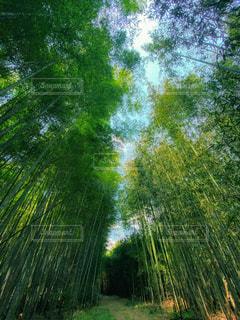 里山の竹林の写真・画像素材[3141917]