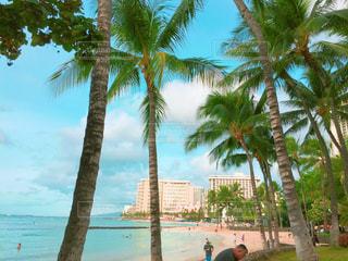 海,空,南国,ビーチ,アメリカ,観光,旅行,ヤシの木,ハワイ,リゾート