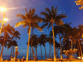 海,夜,南国,ビーチ,アメリカ,観光,樹木,旅行,ヤシの木,ハワイ,リゾート