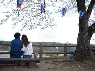 桜の下でベンチに座るカップルの写真・画像素材[1119541]