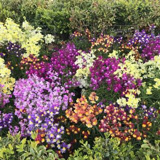 花の写真・画像素材[2054639]