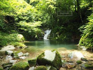 森の中の滝の写真・画像素材[972800]