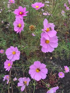 花と蜂の写真・画像素材[973020]