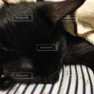 うちの猫さんの写真・画像素材[973080]