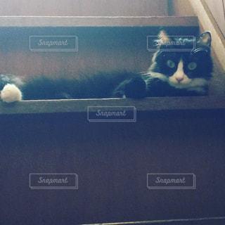 うちの猫さん - No.982242