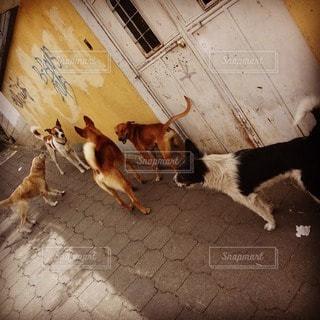 犬の写真・画像素材[32163]