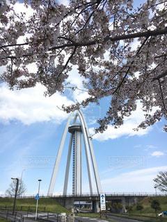 春,桜,景色,背景,道,一宮市,138タワー,愛知県