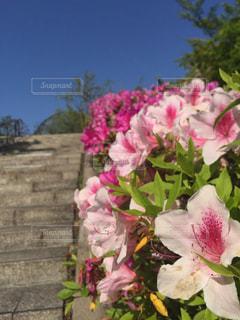 花,階段,道,愛知県,モリコロパーク,愛知万博