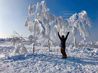 自然,冬,雪,北海道,スキー,霜,スノーボード,ウィンタースポーツ,ニセコ,アクティビティ,ボード,ボードウエア