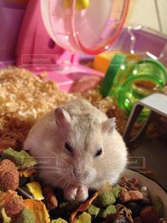 食べ物の皿から食べ物を食べる猫の写真・画像素材[974983]