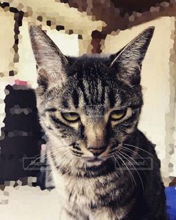 変顔のネコの写真・画像素材[976698]