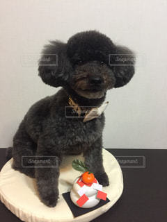 テーブルの上に座っている犬の写真・画像素材[975719]