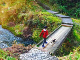 山あいの小径を犬とお散歩の写真・画像素材[975731]