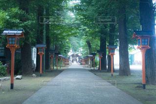 初夏の神社の参道の写真・画像素材[1226273]