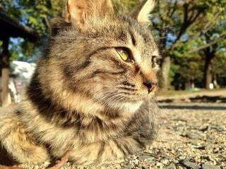 猫の写真・画像素材[32286]