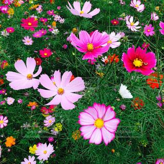 花の写真・画像素材[244547]