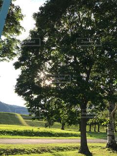 公園の大きな木の写真・画像素材[989692]