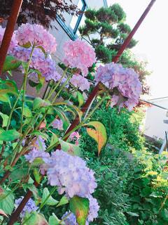 お庭の写真・画像素材[1412835]