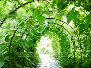 自然,緑,北海道,新緑,トンネル,グリーン,休日,おでかけ