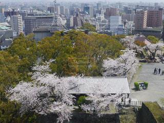 風景,空,春,桜,青空,景色,熊本,熊本城,休日,おでかけ