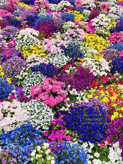 カラフルな花の写真・画像素材[2351470]