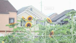 近くのフラワー ガーデンの写真・画像素材[1388264]
