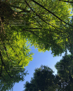 新緑の日々の写真・画像素材[1175646]