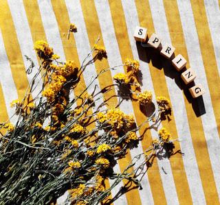 近くの花のアップの写真・画像素材[1279212]
