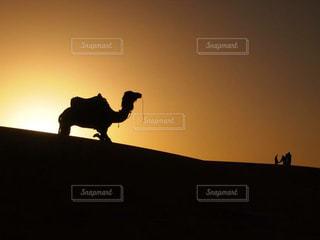 サハラ砂漠の夕焼けの写真・画像素材[979999]