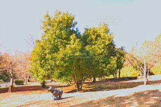 近くの木のアップの写真・画像素材[982615]