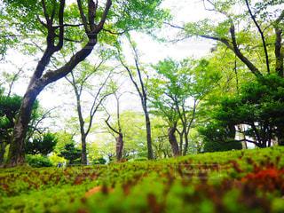 のんびりの写真・画像素材[986533]