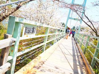 花,桜,橋