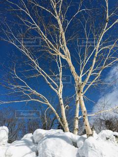 晴れの白木の写真・画像素材[988323]