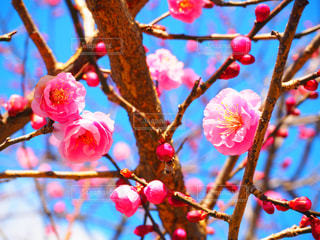 春の飴玉の写真・画像素材[990635]