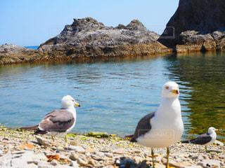 海辺,散歩,カモメ,休日,日向ぼっこ