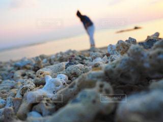 海,海辺,散歩,旅行,休日,珊瑚