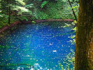 近くに池のアップの写真・画像素材[1013800]