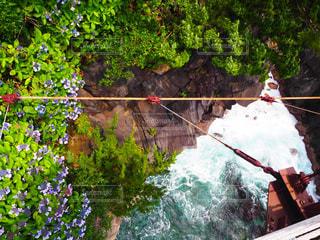 ツリーの横にスキーに乗る人の写真・画像素材[1013828]