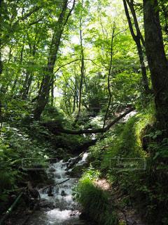 森の中の滝の写真・画像素材[1409064]