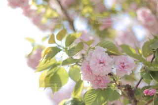 近くの花のアップの写真・画像素材[1147999]